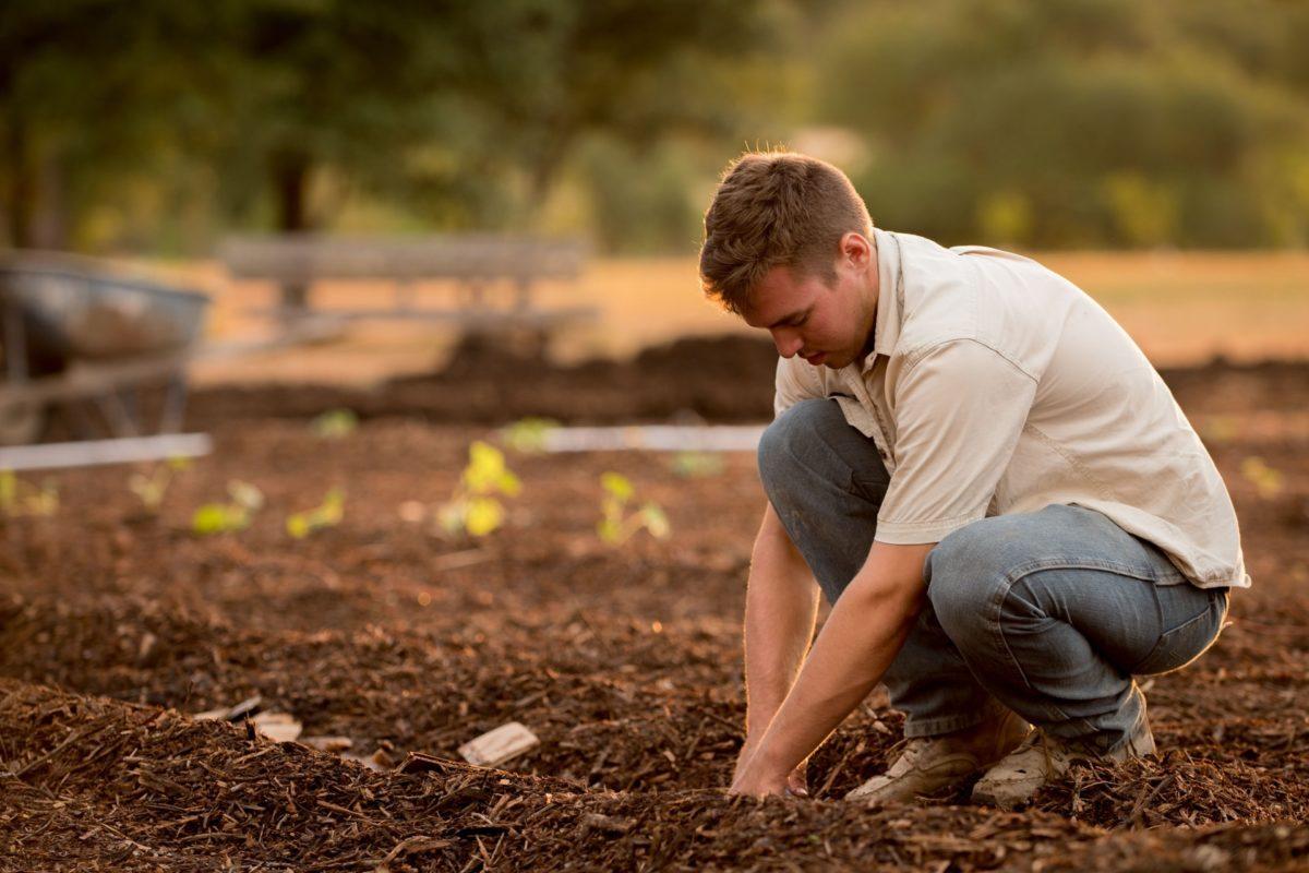 Jardinier permaculture