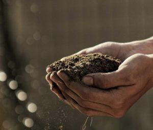 Sol fertile & terre de permaculture